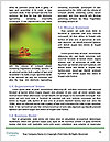 0000080037 Word Templates - Page 4