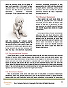 0000080041 Word Template - Page 4