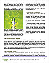 0000080085 Word Templates - Page 4