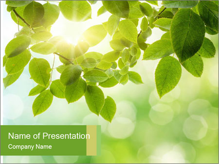 0000080158 PowerPoint Templates