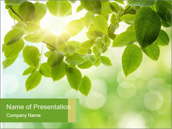 0000080158 PowerPoint Templates - Slide 1