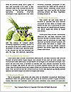 0000080233 Word Template - Page 4