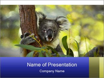 0000080237 PowerPoint Template - Slide 1