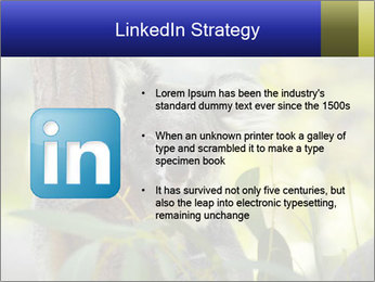 0000080237 PowerPoint Template - Slide 12