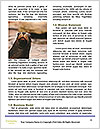 0000080237 Word Template - Page 4