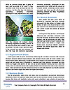 0000080247 Word Templates - Page 4