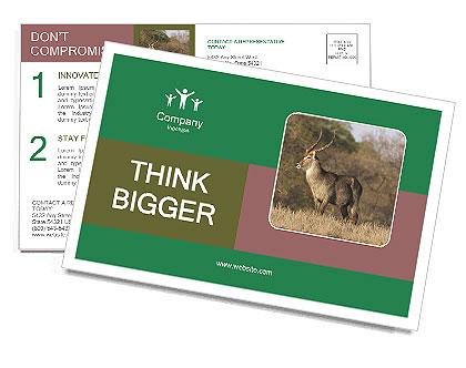 0000080254 Postcard Templates