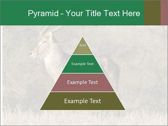 0000080254 PowerPoint Templates - Slide 30