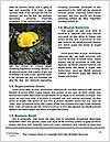 0000080259 Word Templates - Page 4