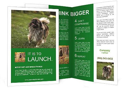 0000080270 Brochure Template