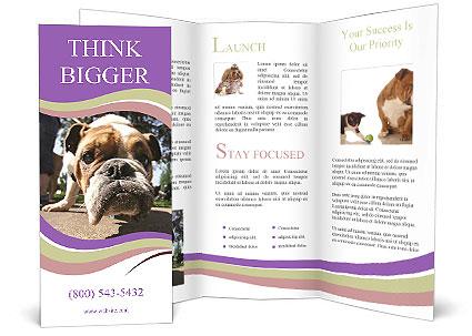 0000080272 Brochure Templates