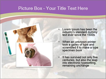0000080272 PowerPoint Templates - Slide 20