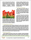 0000080295 Word Templates - Page 4