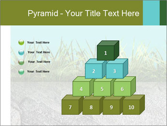 0000080313 PowerPoint Templates - Slide 31