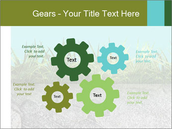 0000080313 PowerPoint Templates - Slide 47