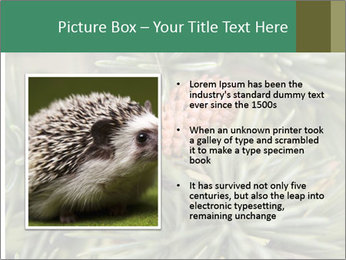 0000080314 PowerPoint Template - Slide 13