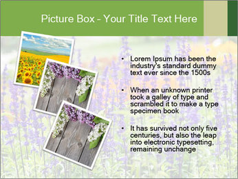 0000080377 PowerPoint Template - Slide 17