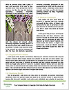 0000080377 Word Template - Page 4