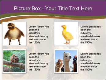 0000080389 PowerPoint Template - Slide 14