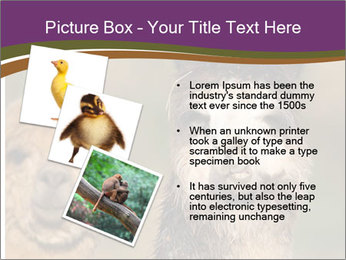 0000080389 PowerPoint Template - Slide 17