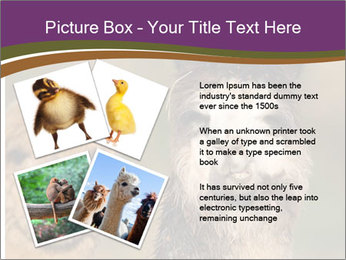 0000080389 PowerPoint Template - Slide 23