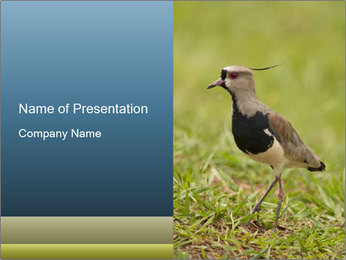 0000080400 PowerPoint Template - Slide 1