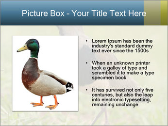 0000080400 PowerPoint Template - Slide 13