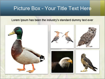 0000080400 PowerPoint Template - Slide 19