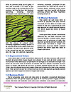 0000080417 Word Template - Page 4