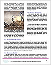 0000080436 Word Template - Page 4