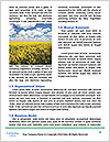 0000080450 Word Template - Page 4