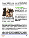 0000080480 Word Template - Page 4