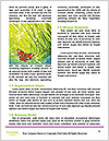 0000080487 Word Templates - Page 4