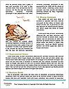 0000080499 Word Template - Page 4