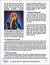 0000080556 Word Templates - Page 4