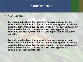 0000080592 PowerPoint Templates - Slide 2