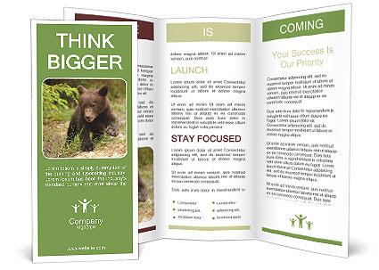 0000080632 Brochure Templates
