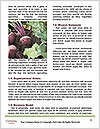 0000080646 Word Templates - Page 4