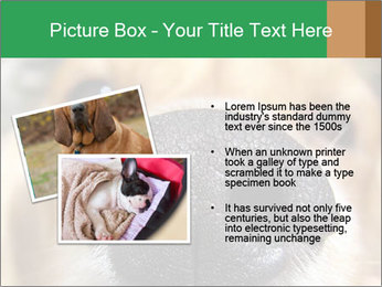 0000080681 PowerPoint Template - Slide 20
