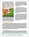 0000080681 Word Templates - Page 4
