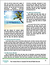 0000080696 Word Template - Page 4