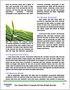 0000080712 Word Templates - Page 4