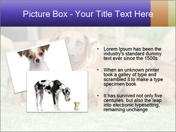 0000080727 PowerPoint Template - Slide 20