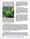 0000080728 Word Templates - Page 4