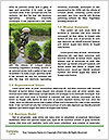 0000080772 Word Template - Page 4