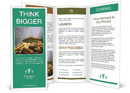 0000080775 Brochure Templates
