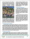 0000080806 Word Template - Page 4