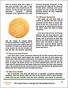 0000080825 Word Templates - Page 4