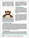 0000080887 Word Template - Page 4