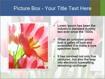 0000080891 PowerPoint Template - Slide 13